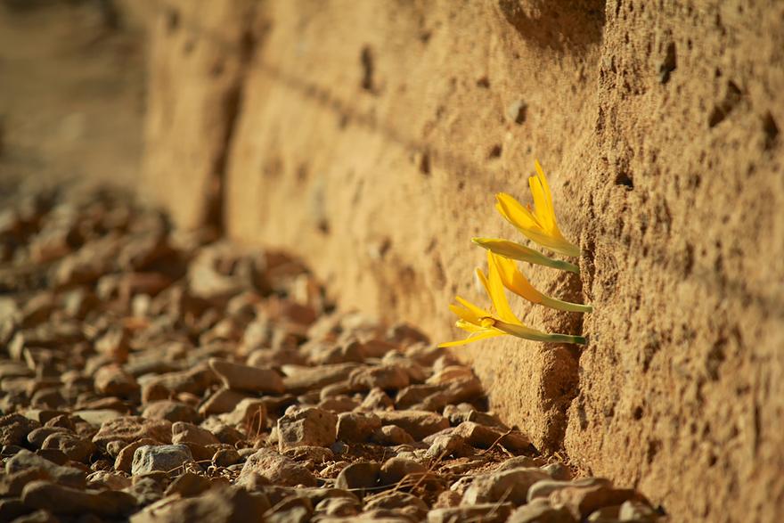 flower-tree-growing-concrete-pavement-107