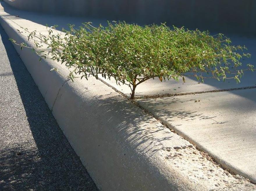 flower-tree-growing-concrete-pavement-112