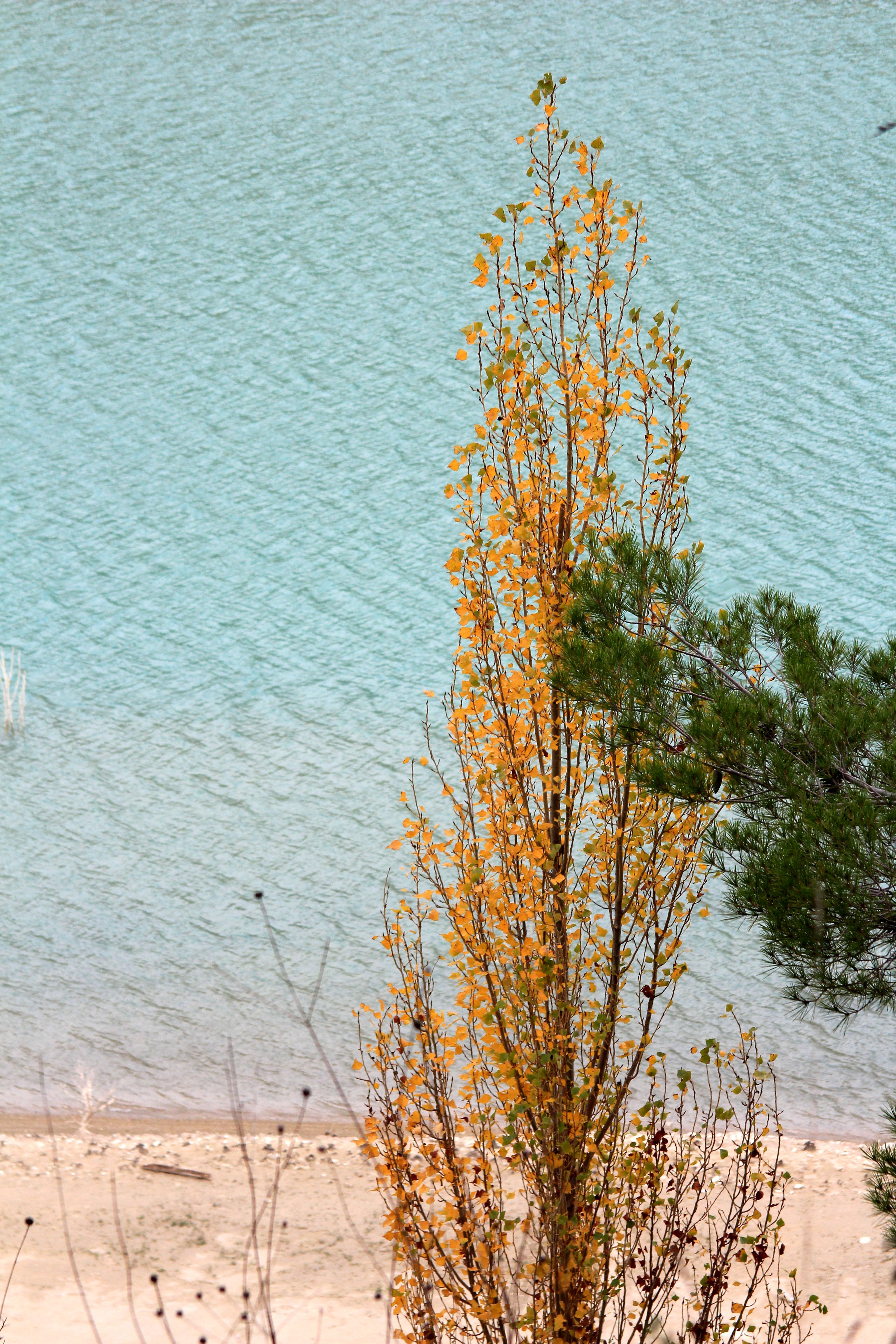 otoño Alicante_María Jesús Mora_ Arquitecta 5