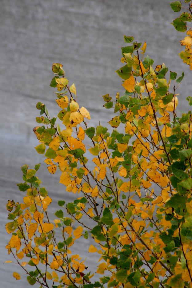 otoño Alicante_María Jesús Mora_ Arquitecta 7