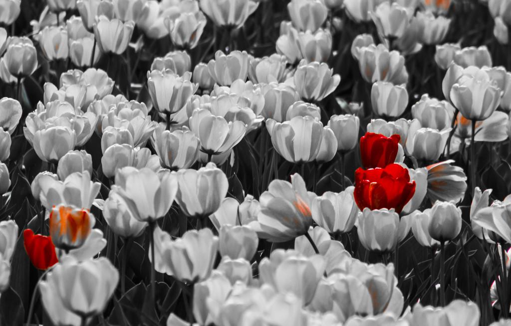 Tulipanes_Fotografía_María Jesús Mora_Arquitecto (21)